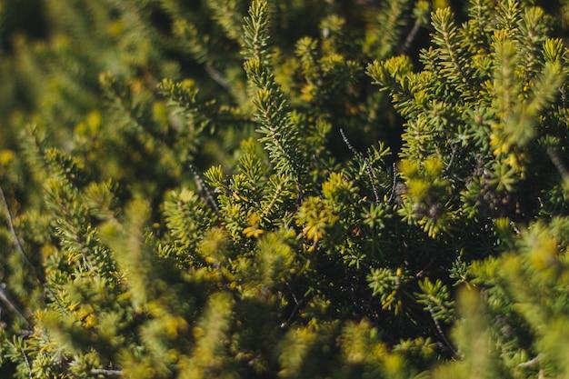 Colpo di alto angolo di una foresta piena di diversi tipi di alberi e altre piante Foto Gratuite