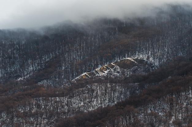 Inquadratura dall'alto della foresta sulle colline coperte di neve e nebbia sopra Foto Gratuite
