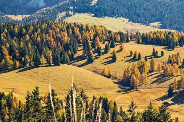 Colpo di alto angolo di colline erbose coperte di alberi in dolomia italia Foto Gratuite