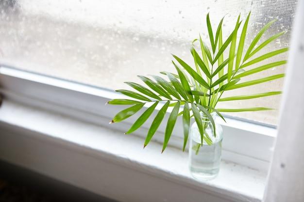 Colpo di alto angolo di foglie di piante d'appartamento in una bottiglia con acqua vicino alla finestra Foto Gratuite