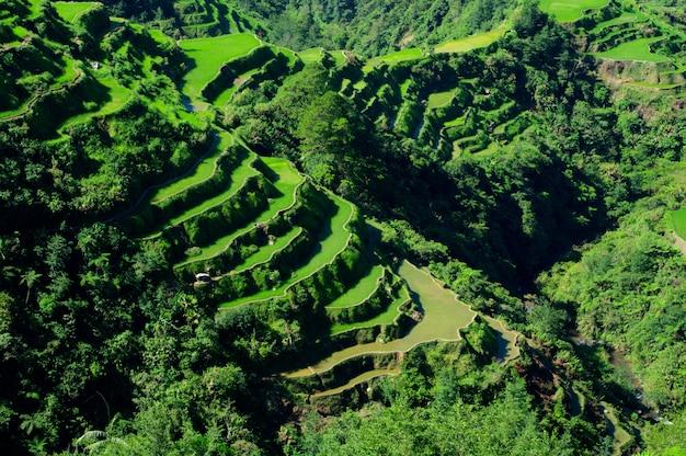 Высокий угол выстрела красивый пейзаж в рисовые террасы банауэ, провинция ифугао, филиппины Бесплатные Фотографии