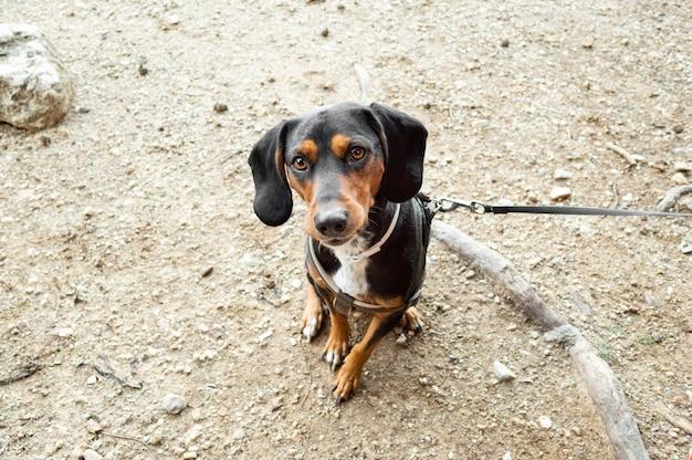 カメラを直接見ながら地面に座っているかわいい犬のハイアングルショット 無料写真