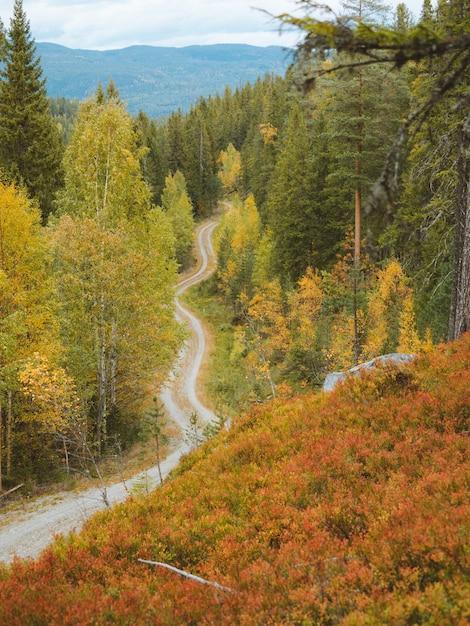 Снимок с высокого угла узкой дороги в окружении красивых осенних деревьев в норвегии Бесплатные Фотографии
