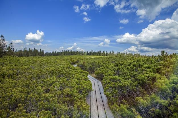 スロベニアのポホリエの丘のリブニカ湖近くの木製の道のハイアングルショット 無料写真