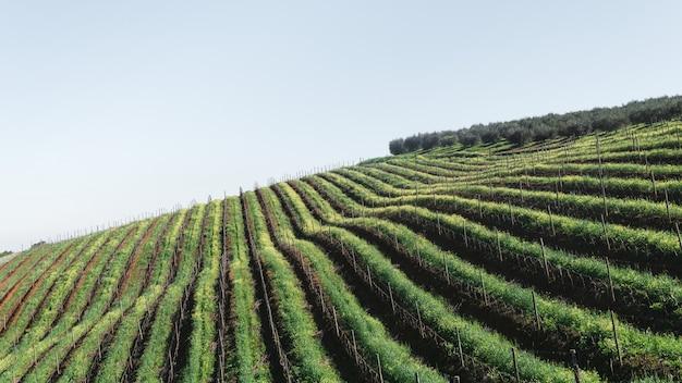 似たような植物のラインがある農業地域のハイアングルショット 無料写真