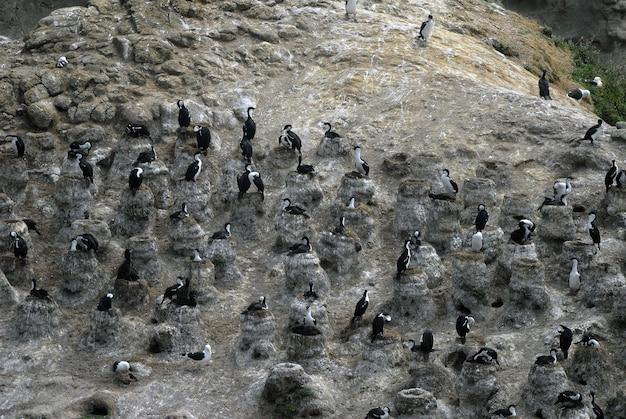 岩の上に立っている海鳥のハイアングルショット 無料写真