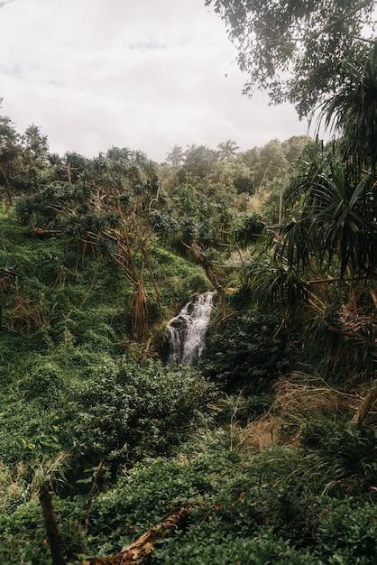 Снимок водопадов в лесу с мрачным небом под высоким углом Бесплатные Фотографии