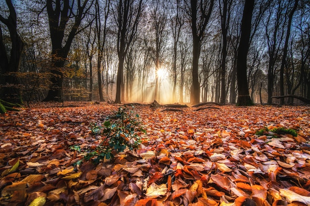 High angle shot of red autumn leaves on the ground in a forest with trees on the back at sunset Free Photo