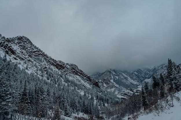 Inquadratura dall'alto di una foresta di abeti rossi nelle montagne innevate sotto il cielo grigio scuro Foto Gratuite