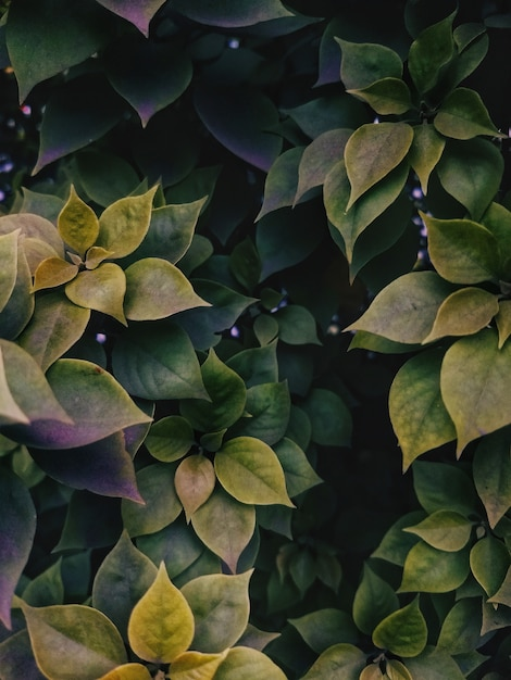 Colpo verticale dell'angolo alto delle foglie verdi che crescono nel mezzo di un giardino Foto Gratuite