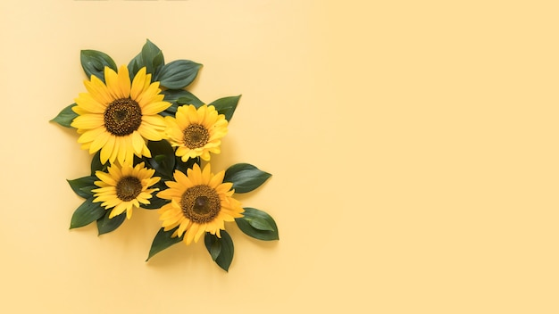 High angle view of beautiful sunflowers on yellow surface Free Photo