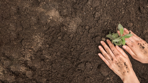 High angle view of human hand planting fresh young plant into soil Premium Photo