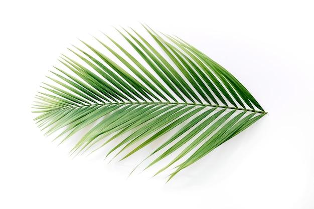 흰색 배경에 고립 된 열 대 야 자 나뭇잎의 높은 각도보기 프리미엄 사진