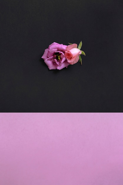 High angle view of beautiful flowers on pink and black wallpaper high angle view of beautiful flowers on pink and black wallpaper free photo mightylinksfo
