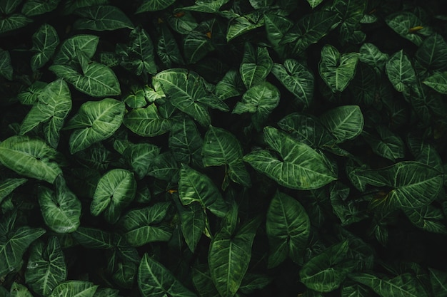 Высокий угол зрения зеленых листьев Бесплатные Фотографии