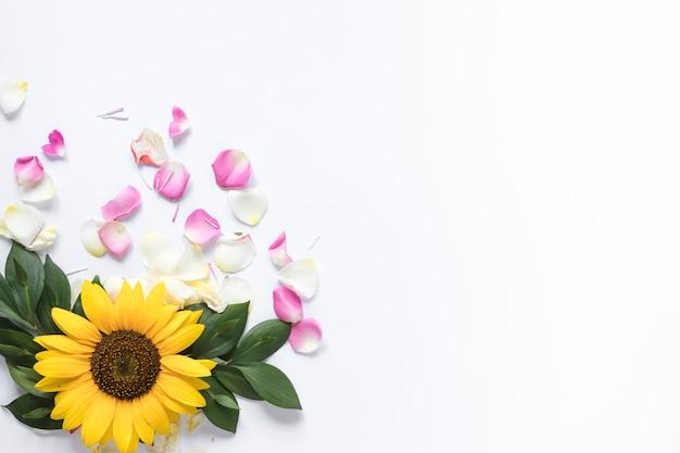 白い背景にピンクと白の花びらとひまわりの高い角度のビュー 無料写真