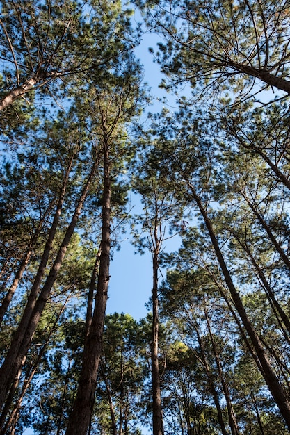 High angle view of the pine forest. Premium Photo
