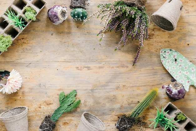 High angle view of succulent plant; peat tray; peat pot and trowel arranging on wooden background Free Photo