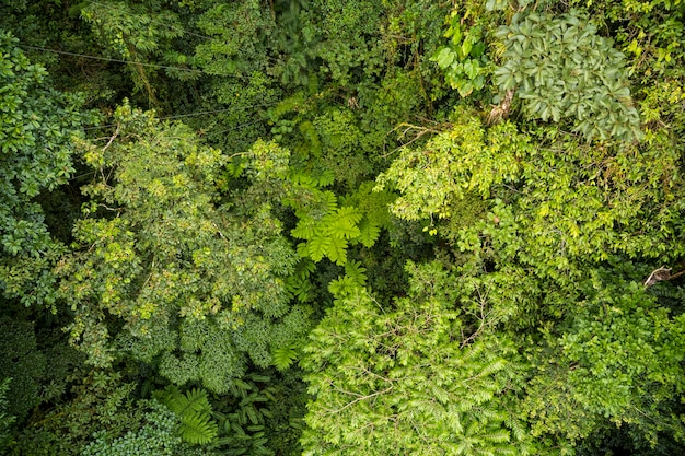 High angle view of tree branches in rainforest at costa rica Free Photo