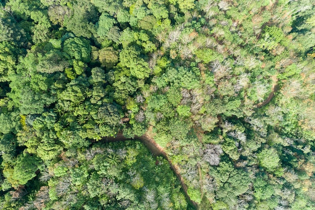 High angle view of tropical rainforest image by drone shot Premium Photo