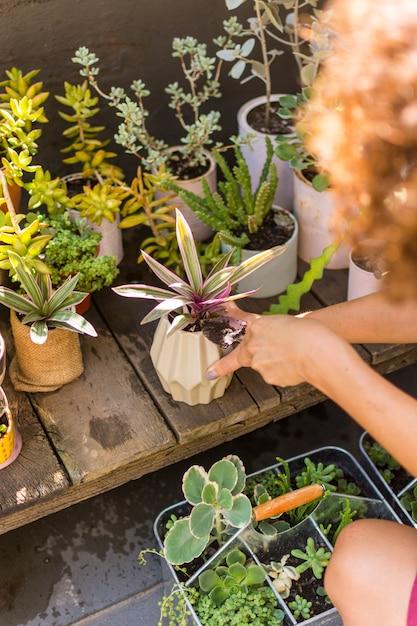 Высокий угол женщина заботится о своих растениях Бесплатные Фотографии
