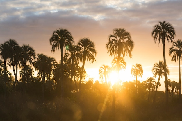 High palms and wonderful sky with clouds at sunset Free Photo