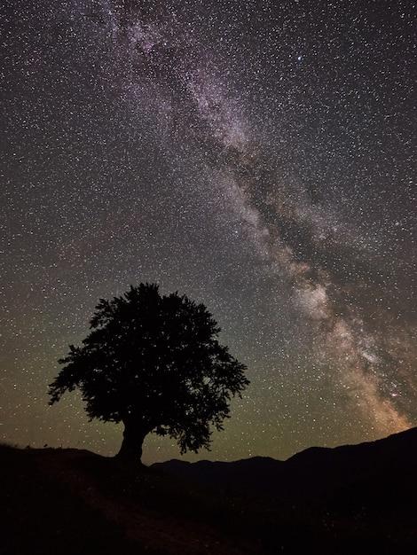 별이 빛나는 밤하늘 아래 높은 나무 프리미엄 사진