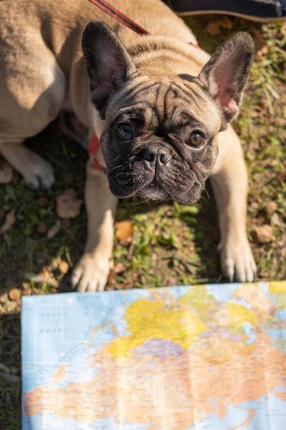 Милая собака и карта высокого вида Бесплатные Фотографии