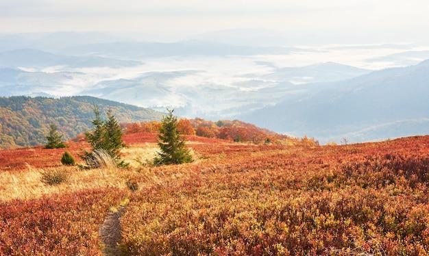 高地の植生は夏が控えめで、異常に美しい色が寒い前に秋に咲きます。ブルーベリーの鮮やかな赤、針葉樹の森の緑、オレンジ色のブク-山のシニー-幻想的な魅力。 Premium写真
