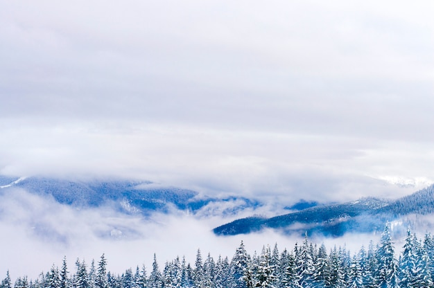 Highlands in winter are shrouded in snow. Premium Photo