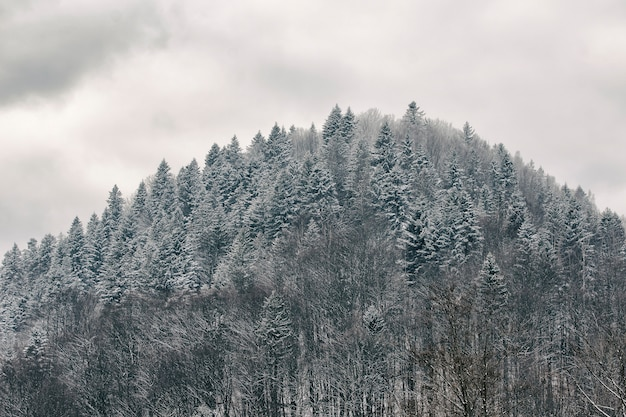 Hill with a snow-covered forest. winter landscape Premium Photo