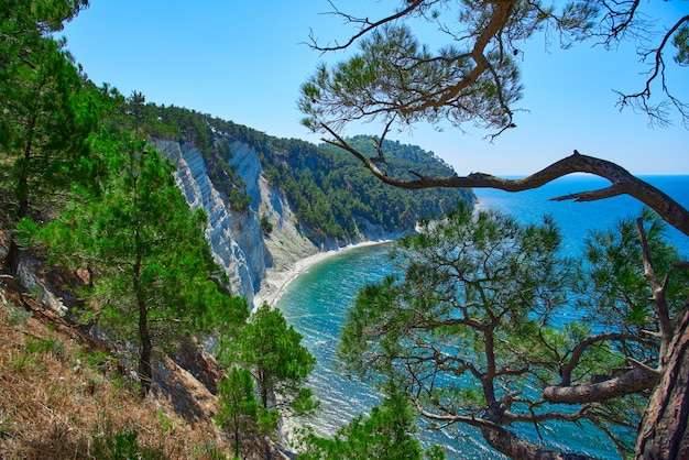 The hillside leading to the sea from pitsunda pine trees Premium Photo