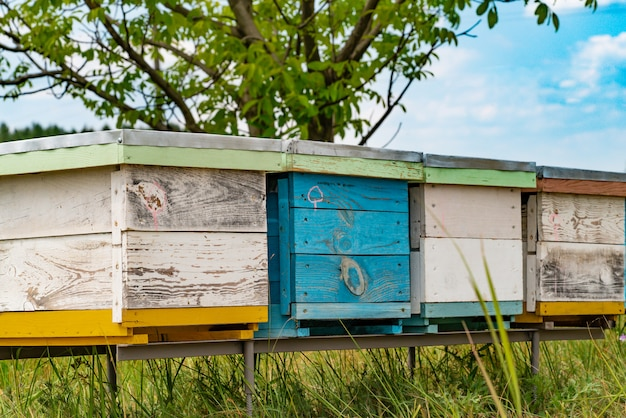 Hives in an apiary with bees flying to the landing boards in a green garden. Premium Photo