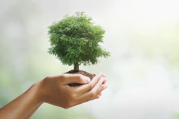 緑色の背景で成長している手holdig大きな木。エコアースデーのコンセプト Premium写真