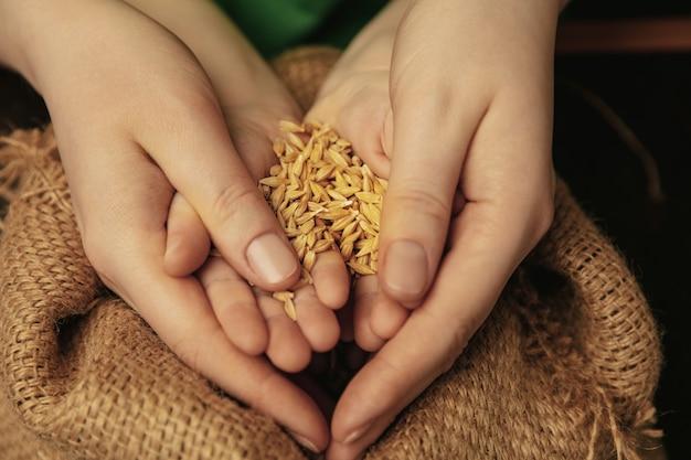 Tenendo i chicchi di grano colorati d'oro immagine ravvicinata di mani di donne e bambini che fanno cose diverse insieme. famiglia, casa, educazione, infanzia, concetto di beneficenza. madre e figlio o figlia, ricchezza. Foto Gratuite