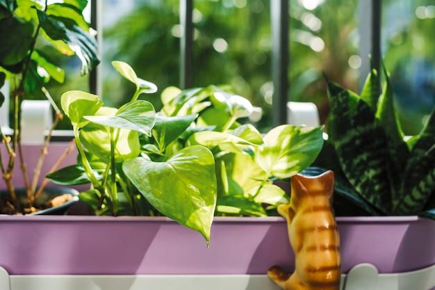 ゴールデンポトスとスネーク植物の家庭と庭のコンセプト Premium写真