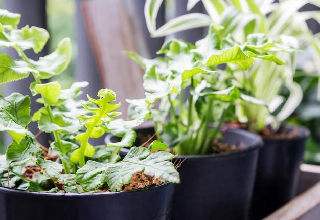 緑と庭のコンセプトは、バルコニーの鉢に入れて Premium写真