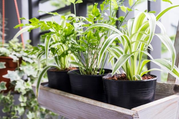 バルコニーの鉢に蜘蛛の植物とシダの家と庭のコンセプト Premium写真