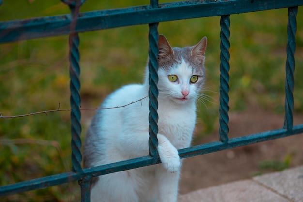 Un gatto senza casa che guarda attraverso metallico quindi Foto Gratuite