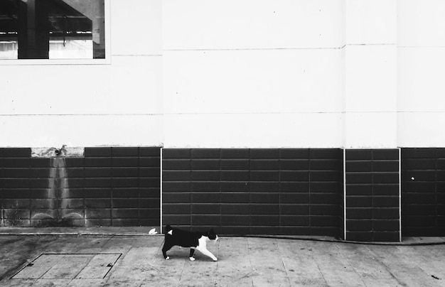 Homeless cat walking city concept Free Photo