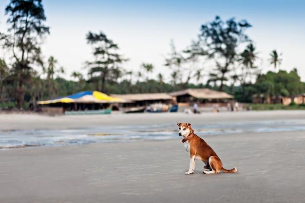 Homeless dog Premium Photo