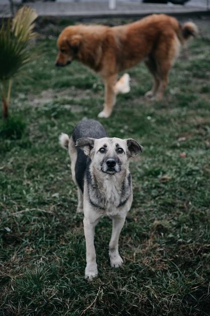 公園を歩いているホームレスの犬。 無料写真