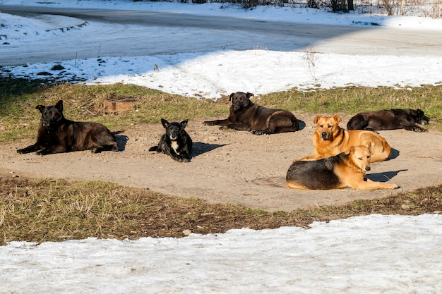 Homeless dogs in winter time heating on sanitaryware well. stray dogs basking on the sewer hatch in cold weather in winter Premium Photo