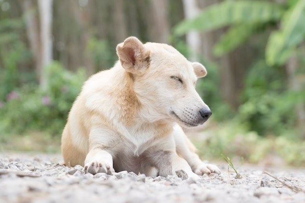 Homeless and hungry little dog abandoned in the garden Premium Photo