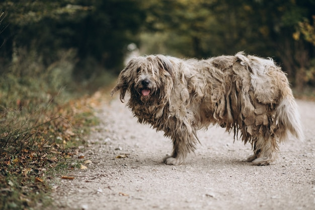 Homeless old dog walking in park Free Photo