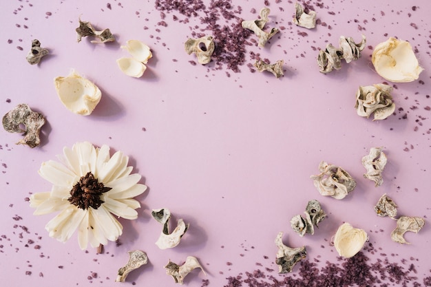 Homemade body scrub; dried pod and white flower against pink backdrop Free Photo