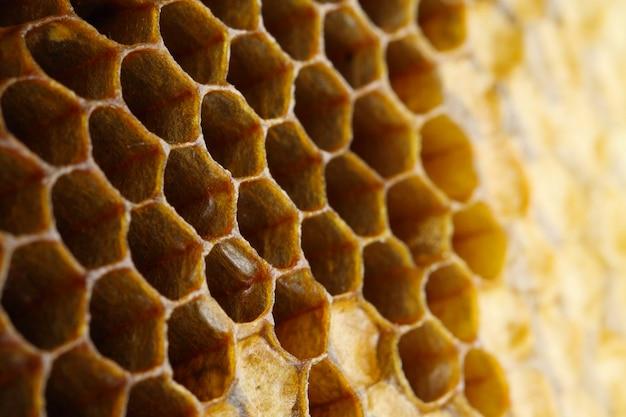 Honey  close-up Premium Photo
