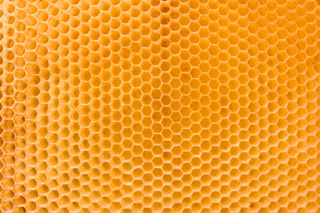 Honeycomb Premium Photo