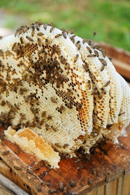 Honeycomb Premium Photo