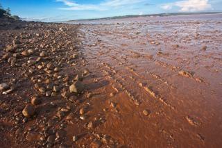 Hopewell beach  scenic Free Photo